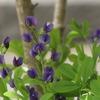 庭の紫紫白赤・・。