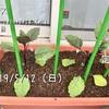 ナスの定植!定植に適した天気と時間帯は?