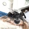 緊急事態宣言2nd、4日目(2021/1/11)スペアリブと起こさず待っている愛犬・大河♡