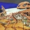 【金沢/福井旅行】福井県立恐竜博物館へ行きました【おすすめ曜日/金沢からのアクセス等】