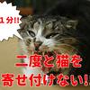 糞被害だけじゃない!!野良猫の出入りは病気の原因に!?