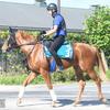 【新馬戦出走馬】池江厩舎の超良血トリオ、阪神で初陣!