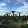 【ガーデンズ・バイ・ザ・ベイ】魅惑のシンガポールの旅vol.2【それは自然と人類の共存か、それともせめぎあいか】