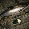 番頭日記20140902 主、オホーツクの鮭を釣る。