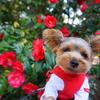 安曇野市三郷【貞亨義民社】椿と桜が綺麗な情緒溢れる神社♡