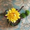 クレイフラワーで菊のお正月飾り