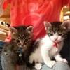 【ペット用チョーカー】首輪ギライの猫の反応はいかに⁈