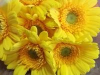 妻の誕生日には花をプレゼントしよう。花選びに迷ったら誕生花を贈れば良い。私は「運命」という言葉は信じる。