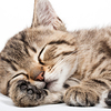 気をつけて!寝るとき「電気をつけたまま眠る」と調子が悪くなるらしい!?