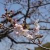 桜クエスト2(千鳥ヶ淵・靖国神社)