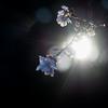 秋に咲く桜を撮りに新宿御苑へ行ってきた