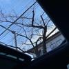 【PEUGEOT3008】快適伊豆ドライブ。純正コンチのよさを再確認する