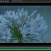 EOS M マジックランタンの 14ビット RAW動画を色補正して思ったこと