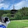観光with【犬】山形県高畠町