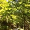 比叡山 延暦寺 横川