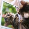 世界は鏡で出来ている