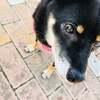 向山雄治の愛犬よんくろと行ける!新宿でペット同伴可のおすすめカフェをご紹介!☆彡