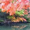 万博記念公園へ紅葉を観に行く②観光19...過去20181125大阪
