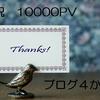 「ブログ運営報告」4か月で10000PV♪ 謎の外部リンクを発見!
