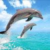 NFLチーム紹介【21】イルカは攻撃的 マイアミ・ドルフィンズ