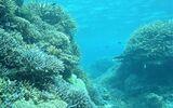 サンゴ移植発言:新聞各社は大久保教授の発言を悪用か?