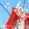 佐野市の朝日森天満宮で梅撮影!!開花状況もあるよ!