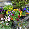 わが家の花たち