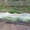 3月の種まき延期 ダイソーではタネが売り切れ続出