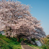 桜 2020 Vol.6