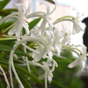 フウランの開花&カッパでゴー☆&ナスとヤングコーンとミョウガの初収穫&ノウゼンカズラと青い空♪