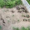 新鮮✨  無農薬   家庭菜園🌱