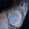 カメラのレンズを変えると、魚はデカく見えるか。
