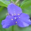 30>6月の庭花   ウエブリアルバムで~~