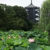京都東寺「五重塔」保存修理工事 2019