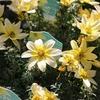 春先きの寄せ植えに最適な花苗 3月編♪
