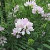 初夏の草花 2