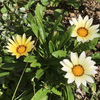 10月に咲いている花