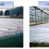 土壌消毒専用のフイルム「バリアスターV」
