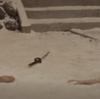『薄桜記』における市川雷蔵の「武士(もののふ)」像造型@神戸国際松竹1月23日