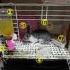 【低予算】我が家のウサギのケージレイアウトを大公開します。