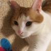 猫の結膜炎  目薬が変わりました