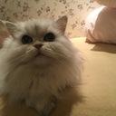 ハッピー動物病院のブログ