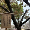 5月19日・日曜日&5月20日・月曜日 【うんちくま17:造幣局の桜 6】