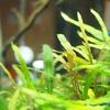 水草水槽、苔の原因と対策