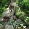 寺野の大楠
