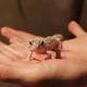「サワレルハチュウルイ展」で爬虫類とふれあってきたので感想書いてく!