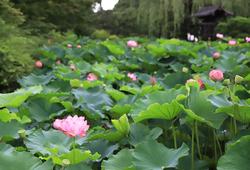 """京都の人気フローリストが教える! 夏・秋に訪れたい""""京都らしい""""花の名所と観光の仕方"""