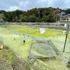 鎌形養魚場の釣り堀(千葉県千葉)
