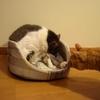 猫ベッドそれから