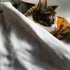 【愛猫日記】毎日アンヌさん#208
